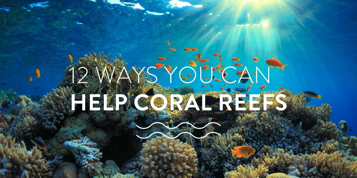 12 Ways YOU Can Help Coral Reefs