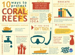 10 ways to protect coral reefs infographic