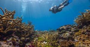 diver hovering above a coral reef, not touching marine life
