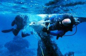 Divers helping to free a seal from a net