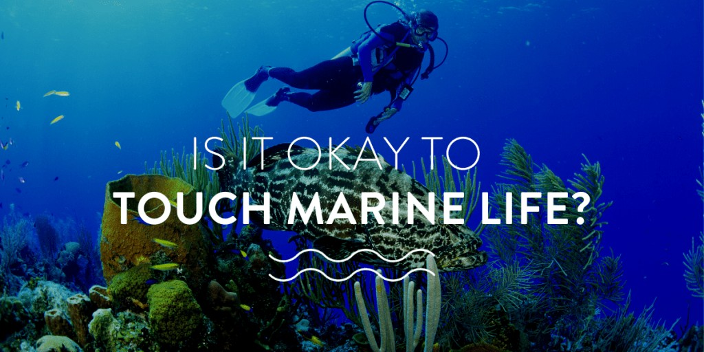 Is it okay to touch marine life?