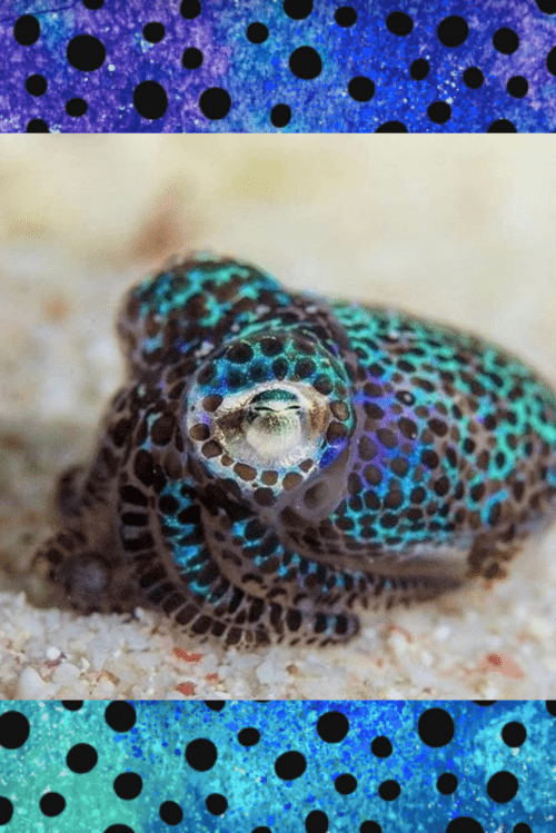 LIMITED EDITION! Bobtail Squid Bodysuit (Preorder only)