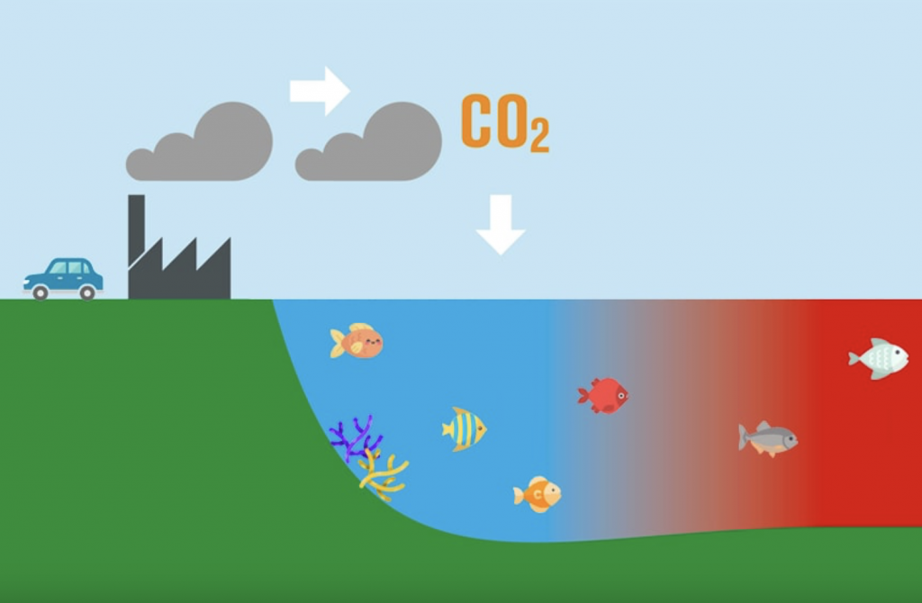 Ocean acidification - burning of fuel releasing CO2 into atmosphere, which ends up in our oceans, lowering the PH of the sea