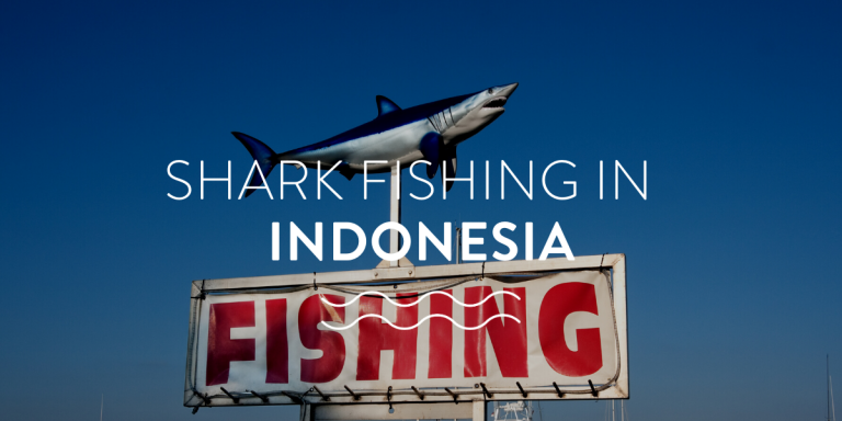Shark Fishing In Indonesia