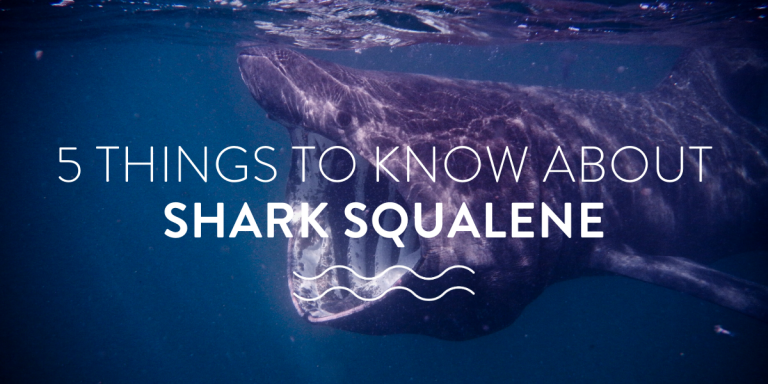 5 things to know about shark squalene