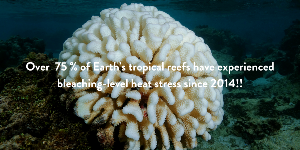 Eco jargon busting of coral bleaching