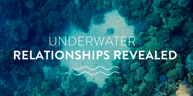 Underwater relationships revealed