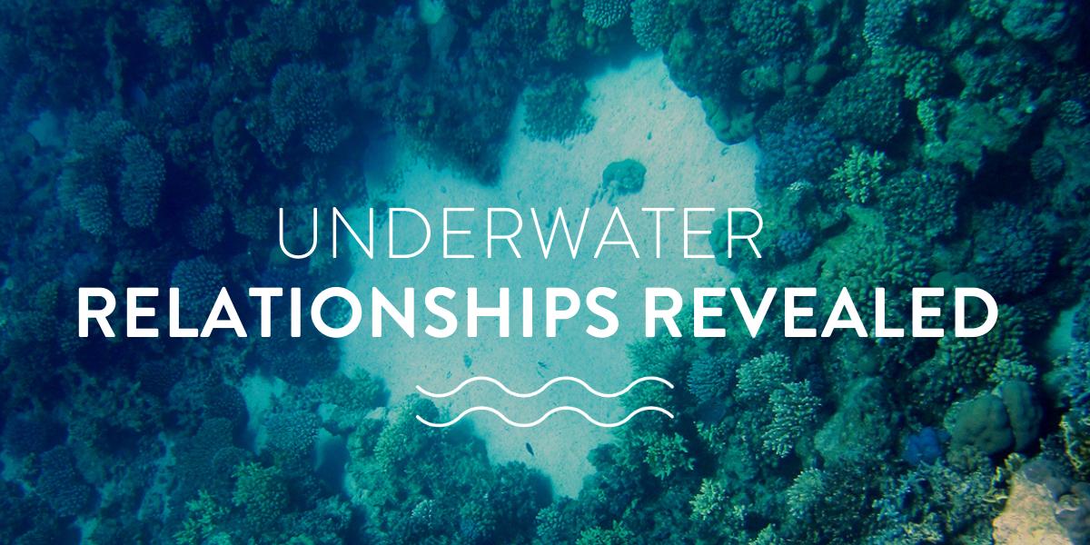 Underwater relationships revealed