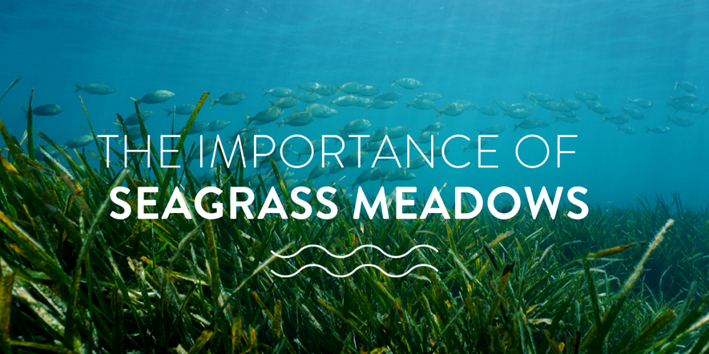 The Importance of Seagrass Meadows