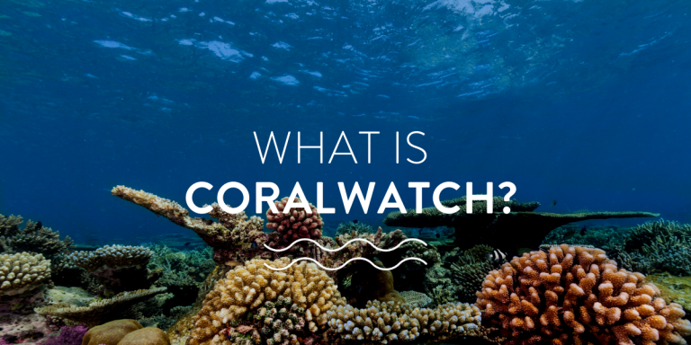 researching coral health - what is coralwatch?