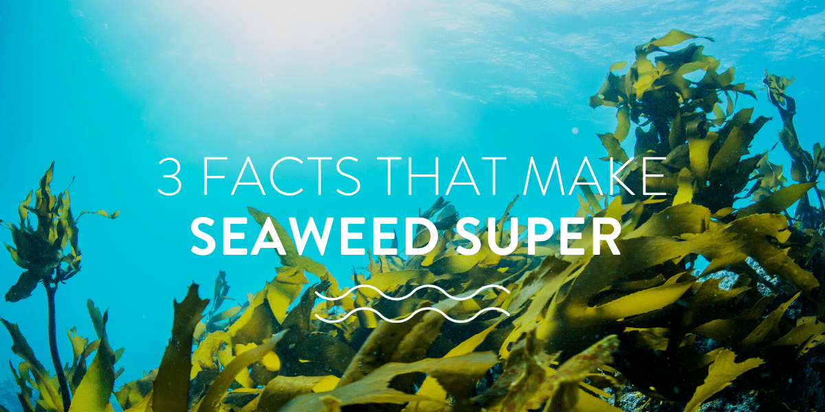 3 facts that make seaweed super