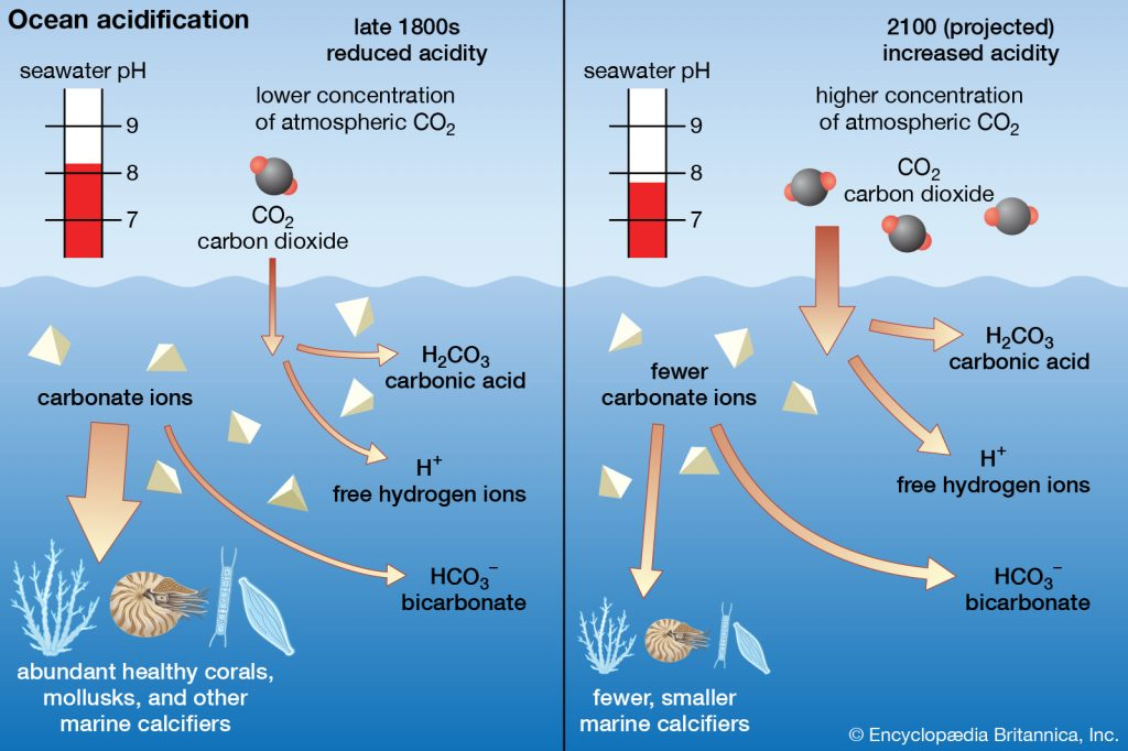 diagram showing the impact of ocean acidification on carbonate ions