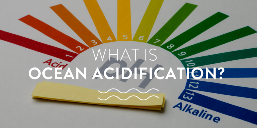 what is ocean acidification?