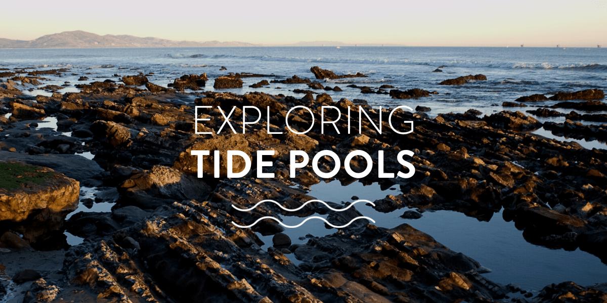 Exploring tide pools